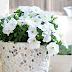 تزيين وعاء الورود