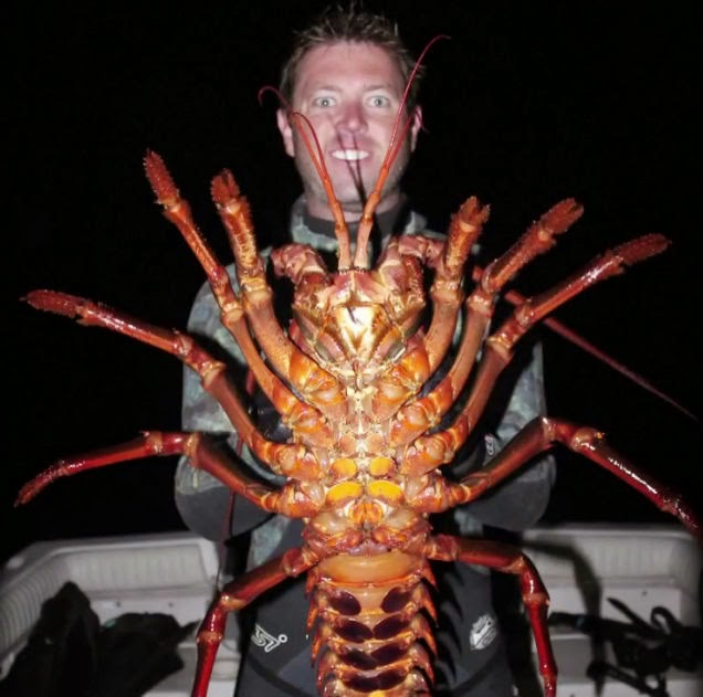 Bigfoot Evidence: Giant Lobster: Biologist Discovers 70-Year-Old Crustacean