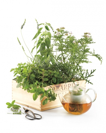 Good Ideas : Tea Garden in a Box