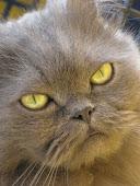 En memoria de nuestro gato