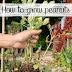 How to grow peanuts #Organic_Gardening