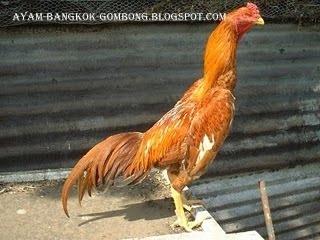 Ayam Brazilian