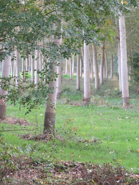 Frissonner dans les bois