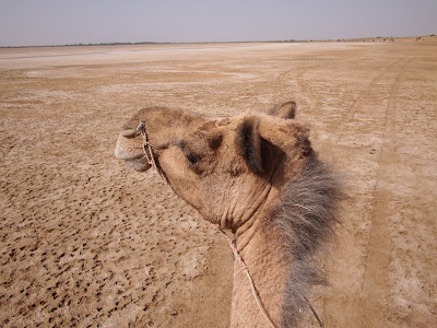 Rajasthan, offbeat travel, off the beaten path, village, rural, pabu ki dhani, desert, Jaisalmer