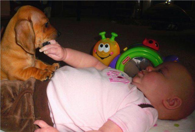 Cachorro mordendo o dedo de um bebê