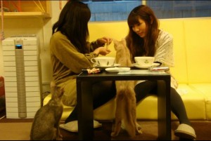 strange coffee bar in japan with cats