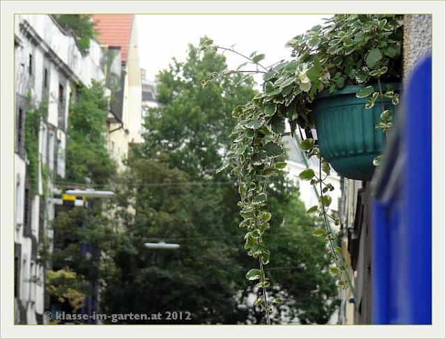 Ampel mit Blattschmuckpflanze als Verbindung zum Kunsthaus Wien