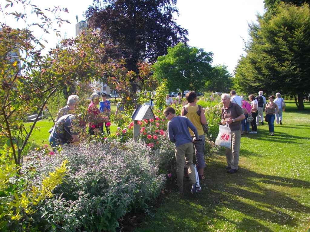Les amis des roses orl anaises l 39 association des amis des for Au jardin des amis