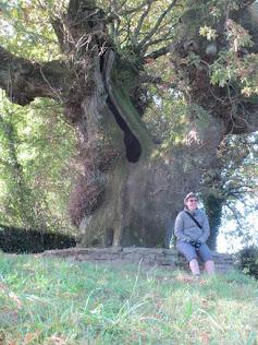 een oude boom en een jong meisje