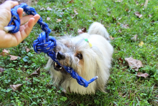 To Dog With Love: 3 Great Dog Games That Don't Cost a Dime!