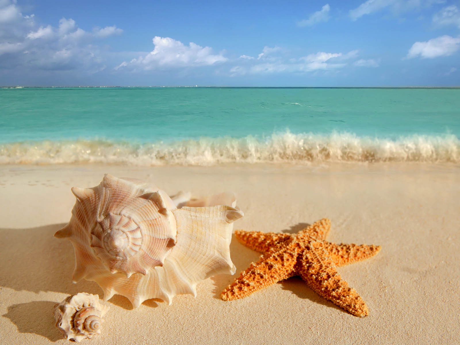 Wallpapers starfish wallpapers for How to fish from the beach