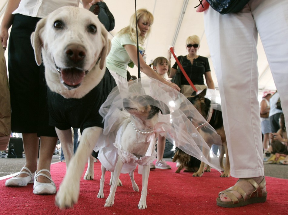 Funny dogs marriage cute lovely dogs marriage