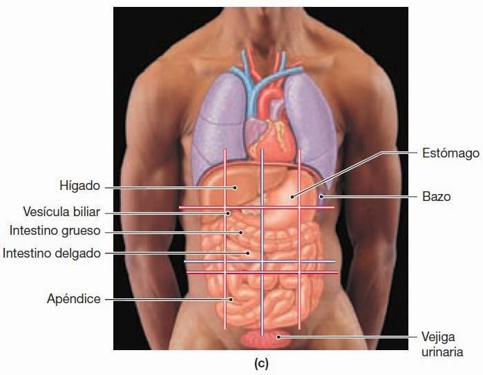 Introducción a la Anatomía | EMS Spain