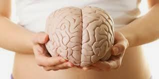 jaringan otak