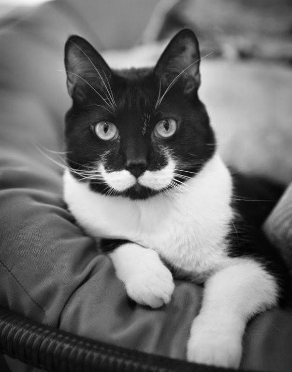 Gatos Curiosos por los Dibujos Increíbles en su Pelaje 1