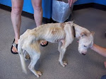 "6/10/2011 ""Norton was a walking skeleton when brought to PAL. He had bite/puncture wounds all over"