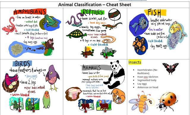 Classification worksheet biology corner