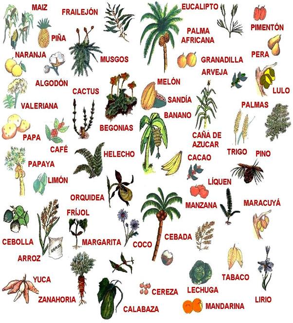 fauna flora piso termico calido: