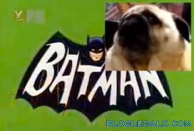 Cachorro fã do Batman