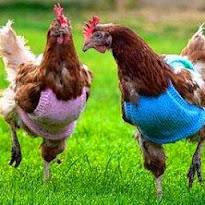 Knit, Knit, Knit!