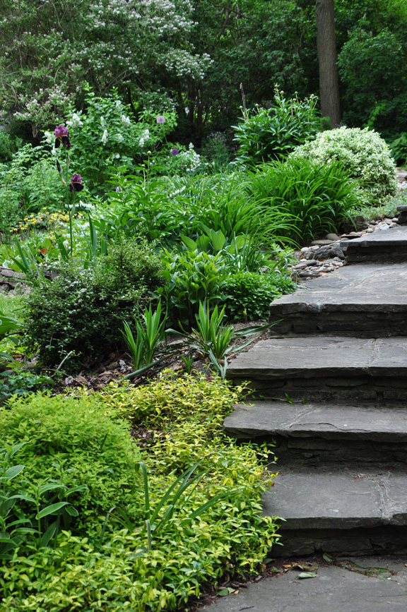 Three Dogs in a Garden: Ideas for Gardens with an Uneven Terrain