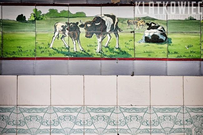 Poznań: zabytkowe kafle z dawnego sklepu mięsnego
