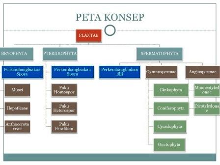 Klasifikasi Makhluk Hidup Klasifikasi Tumbuhan Inan Kito