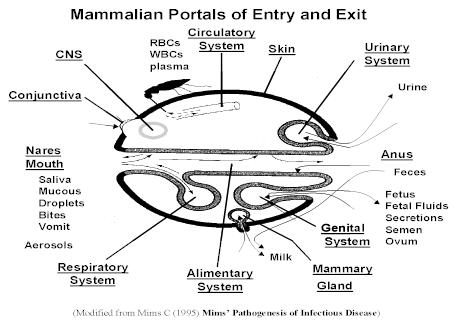 Hình 2: Bề mặt cơ thể và các vị trí liên quan đến các hình thức truyền lây bệnh