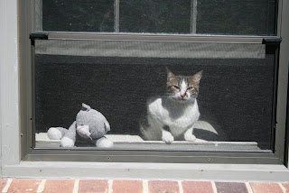 Mouser the real cat plus Princess' stuffed kitty
