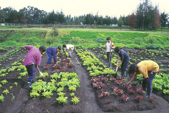 El medio ambiente conservaci n del suelo for 5 cuidados del suelo