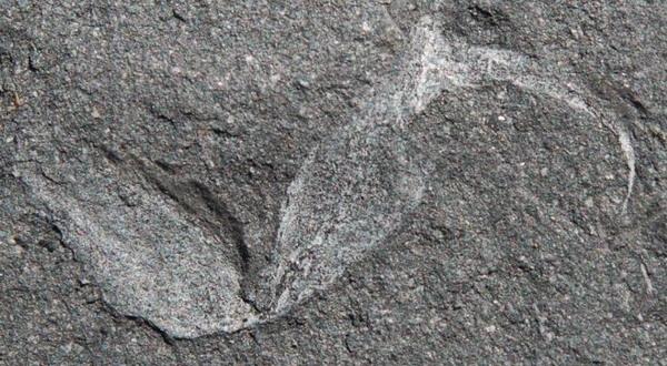 Fosil Kalajengking Yang Berusia Jutaan Tahun