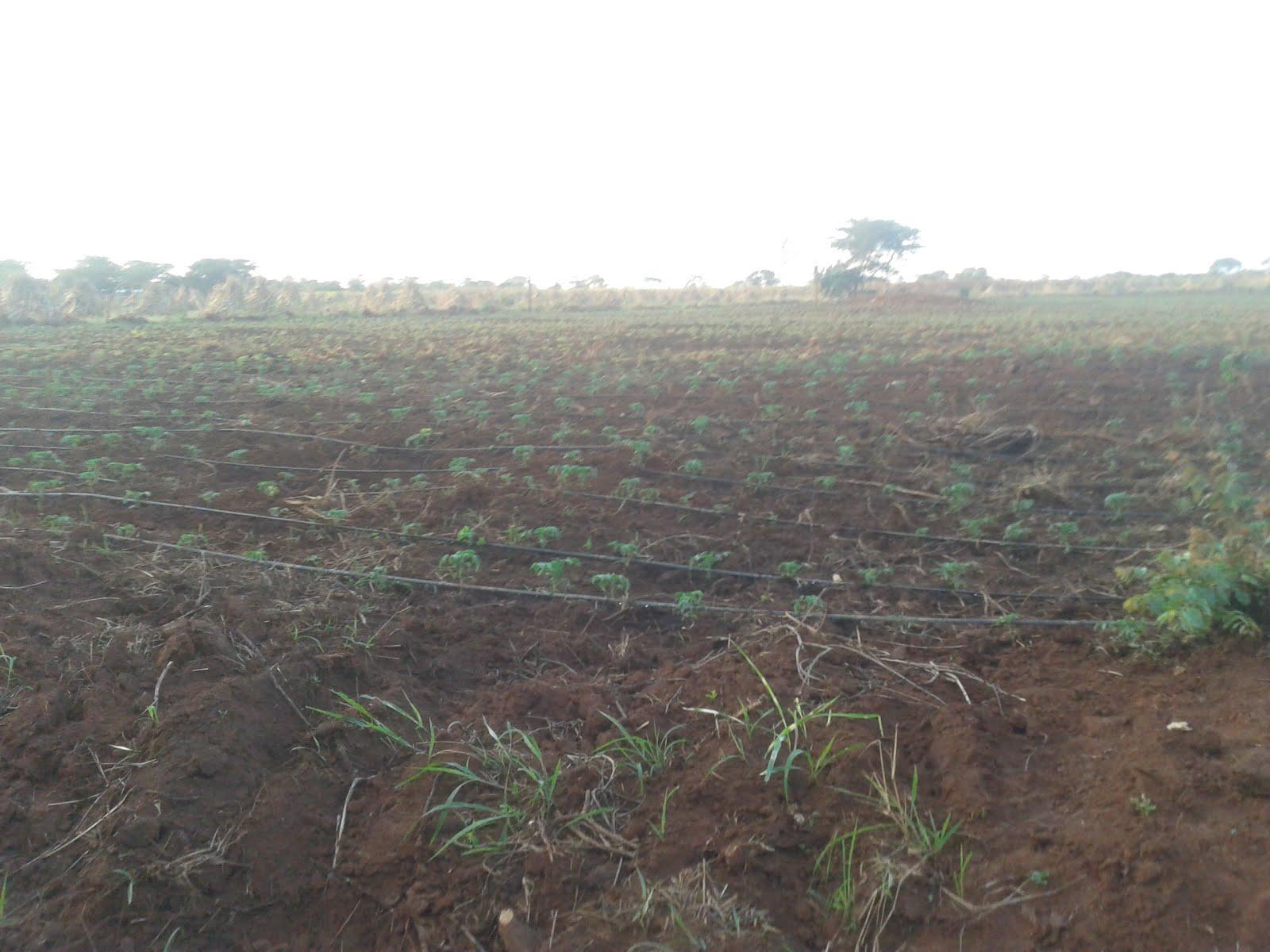 Farm - Lusaka West