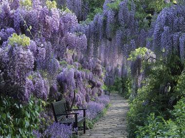 Wisteria Garden's