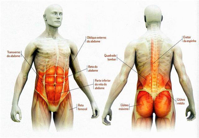 http://2.bp.blogspot.com/-4Mk1VzfQjUY/UIg7Xi8vtWI/AAAAAAAAAK4/g8bsPQH6M1s/s1600/Musculos+do+Core+eLIS.jpg