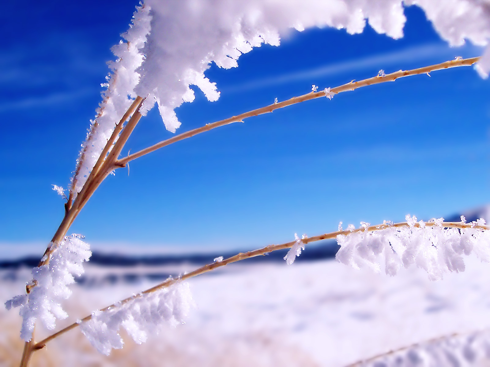 http://2.bp.blogspot.com/-4MpgCHuY6X0/TamTTdhuLXI/AAAAAAAACrE/t3IS8zOKypg/s1600/winter+scenes+1+%252819%2529.jpg