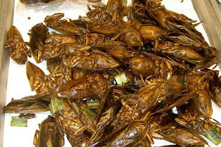 Kumbang Air Besar Goreng