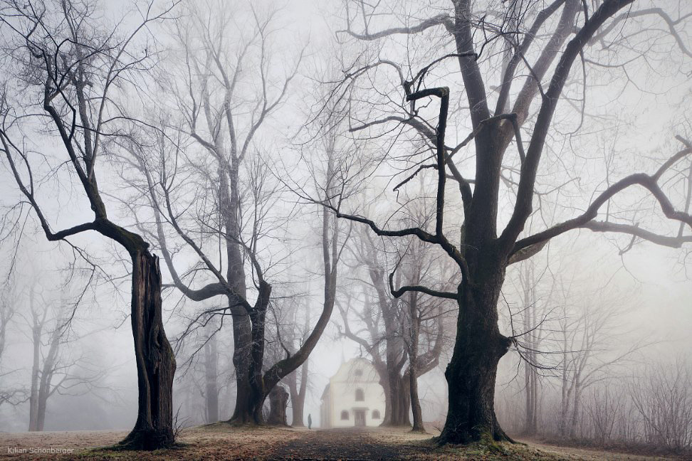 wooded lane with white house on foggy day