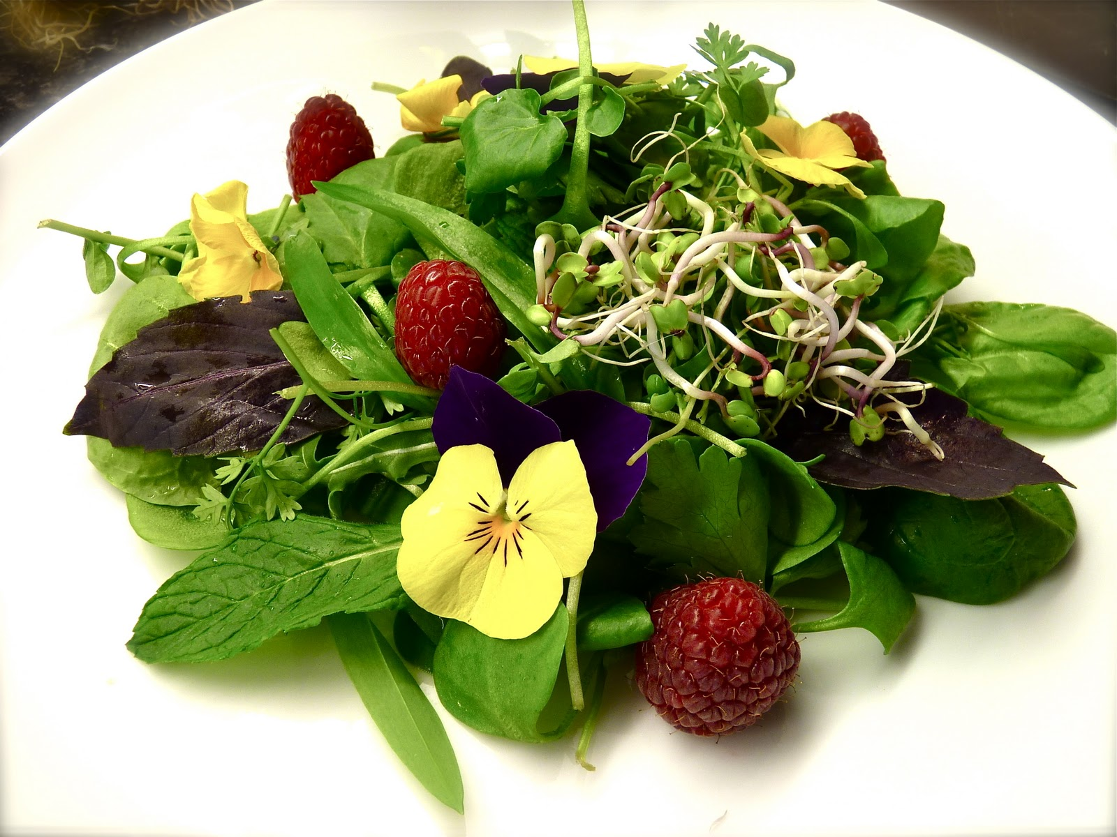 there is green salad plain boring then there is herbs salad salad made ...