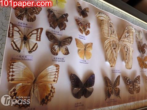 2012陽明山蝴蝶季