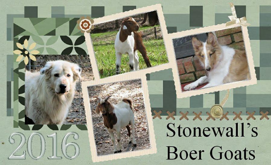 Stonewall's Boer Goats