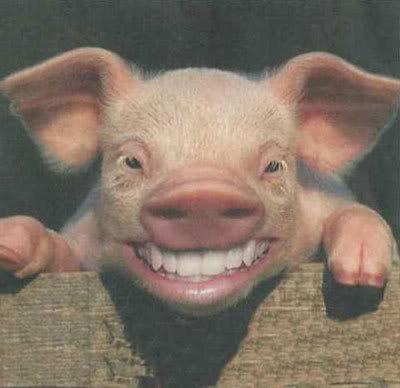 Animals with Human Teeth