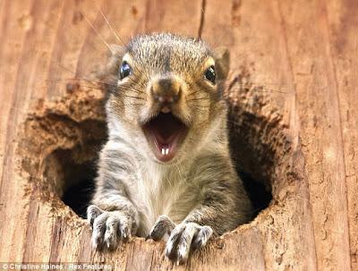 Squatter squirrel