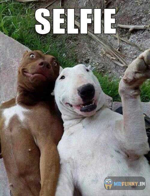 funny-dog-selfie-picture