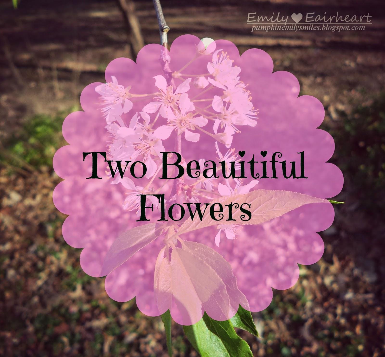 Two Beautiful Flowers Pumpkin Emily