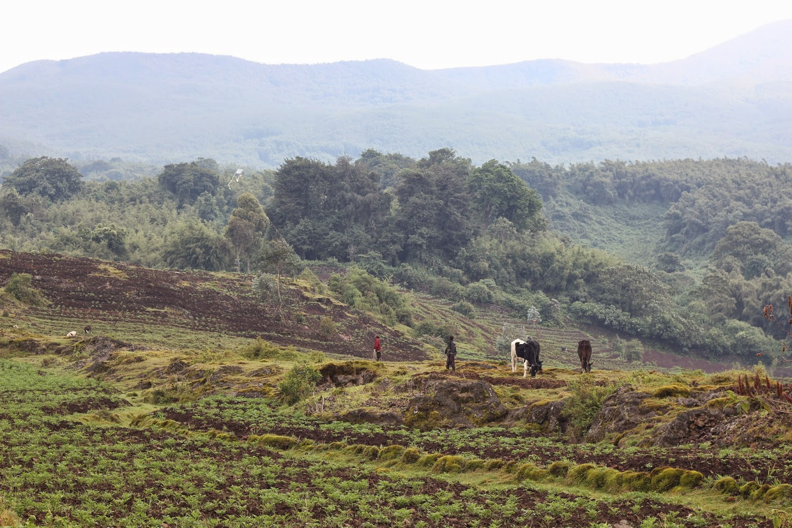 Rwandan countryside and landscape