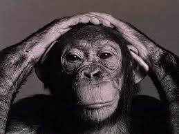 mono, manos cabeza, simio
