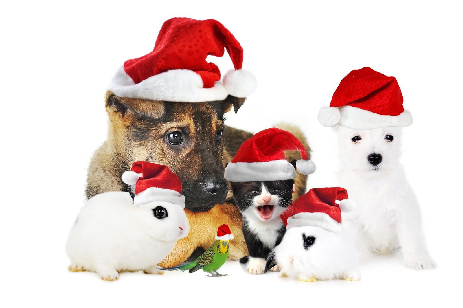 Christmas Animals 2012
