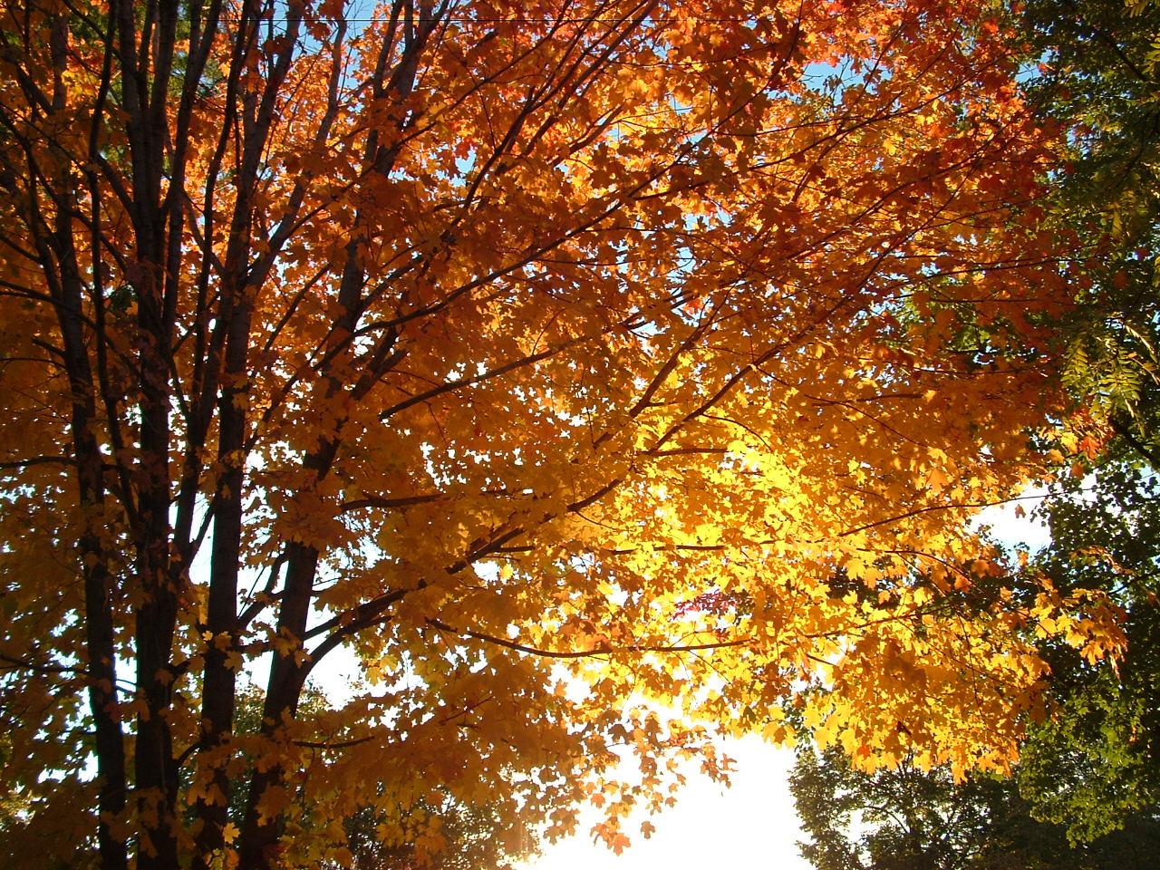 En Güzel Sonbahar HD Duvar Kağıtları