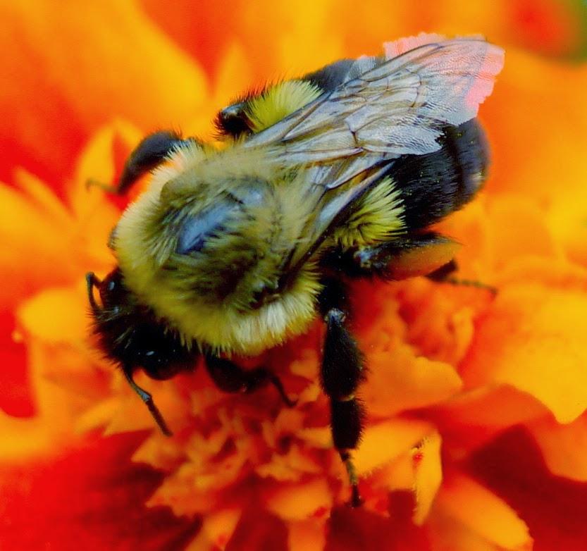 Beekeeping, URI Master Gardener