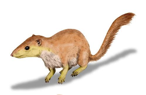 primates extintos del paleoceno Purgatorius